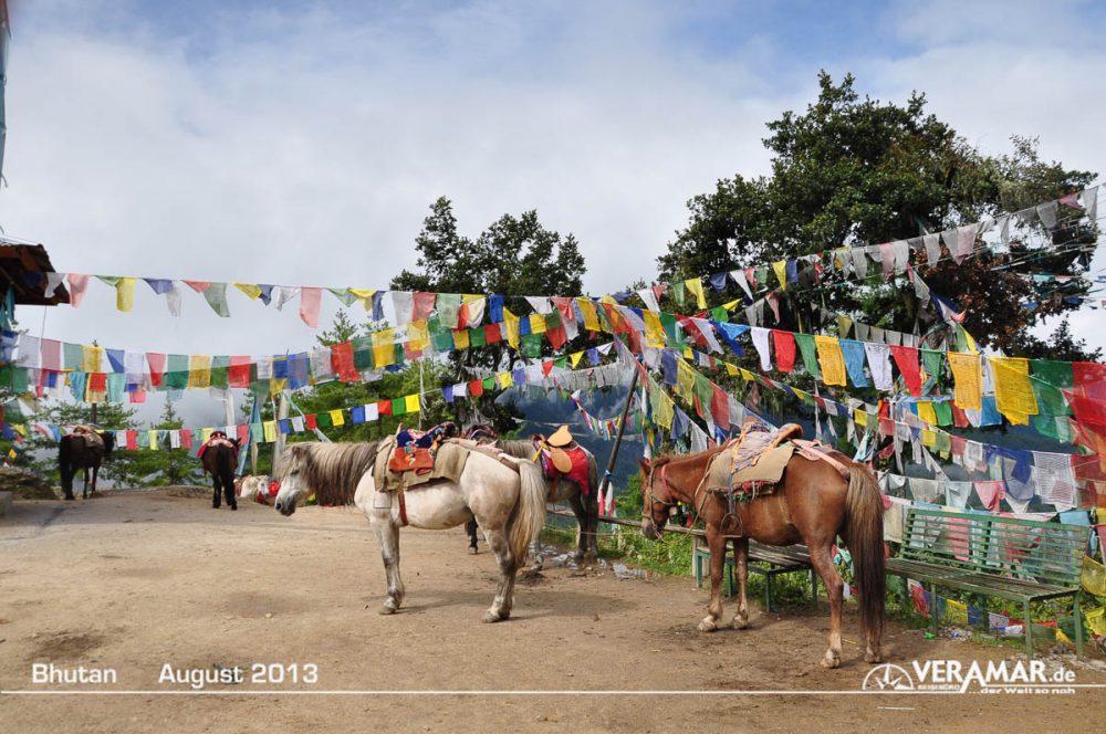 Bhutan Pferde