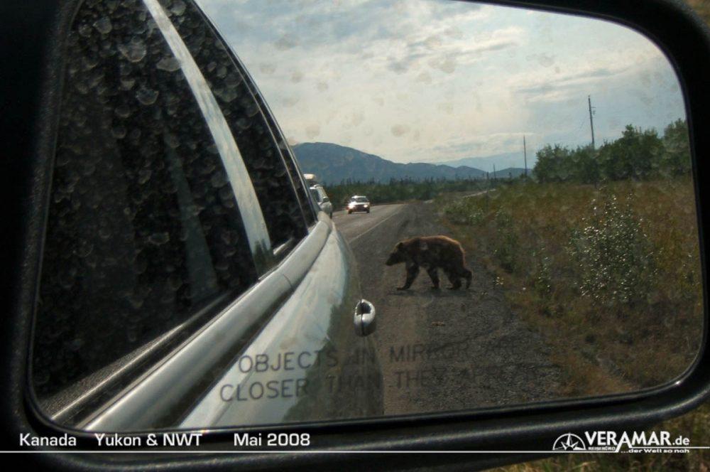Yukon Bär