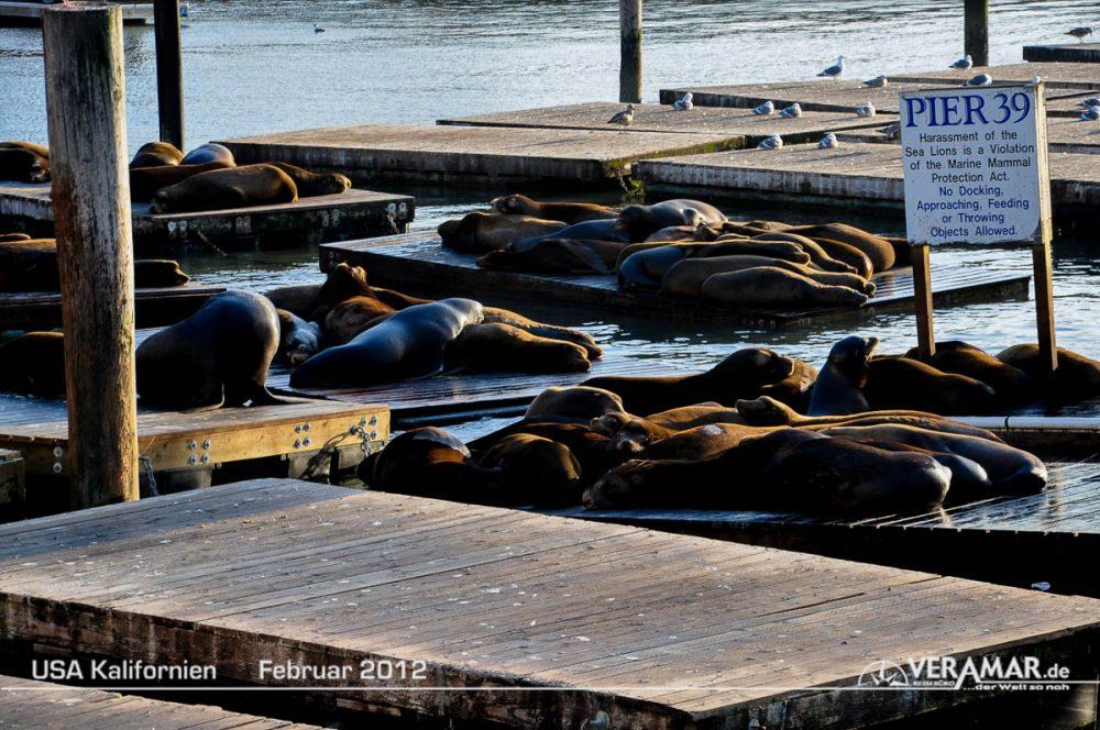 Robben Pier 39